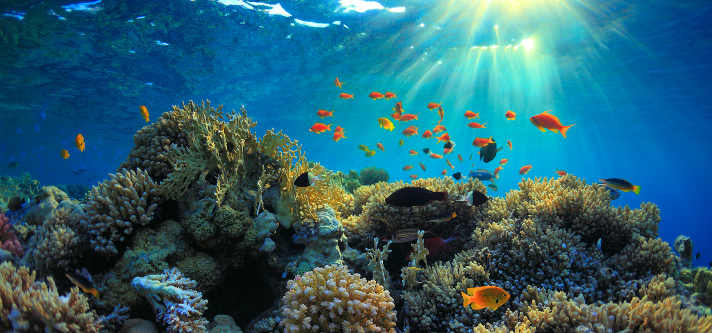 Marines Diving Club   best diving center good prices at Sharm Plaza Hotel